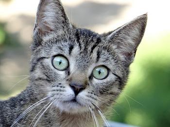 ネコ 病気の悩み.jpg